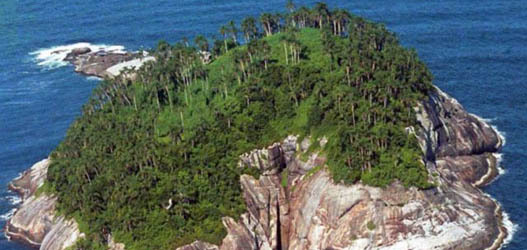 lugares mais assustadores do mundo Ilha de Queimada Grande, São Paulo